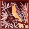 1_perroquet